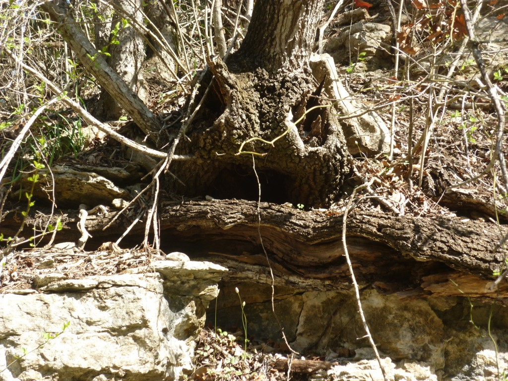 gargoyle guarding Tenacio Spring
