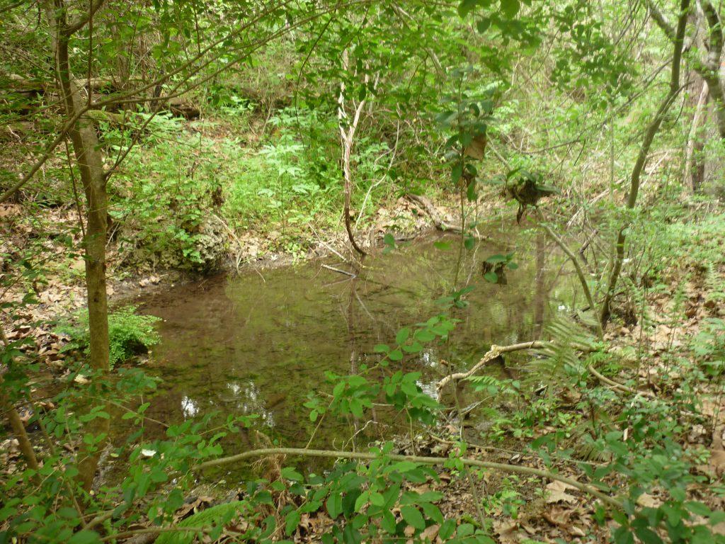 Spring-fed creek