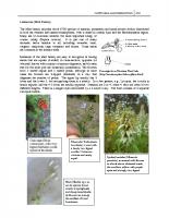 Family Lamiaceae